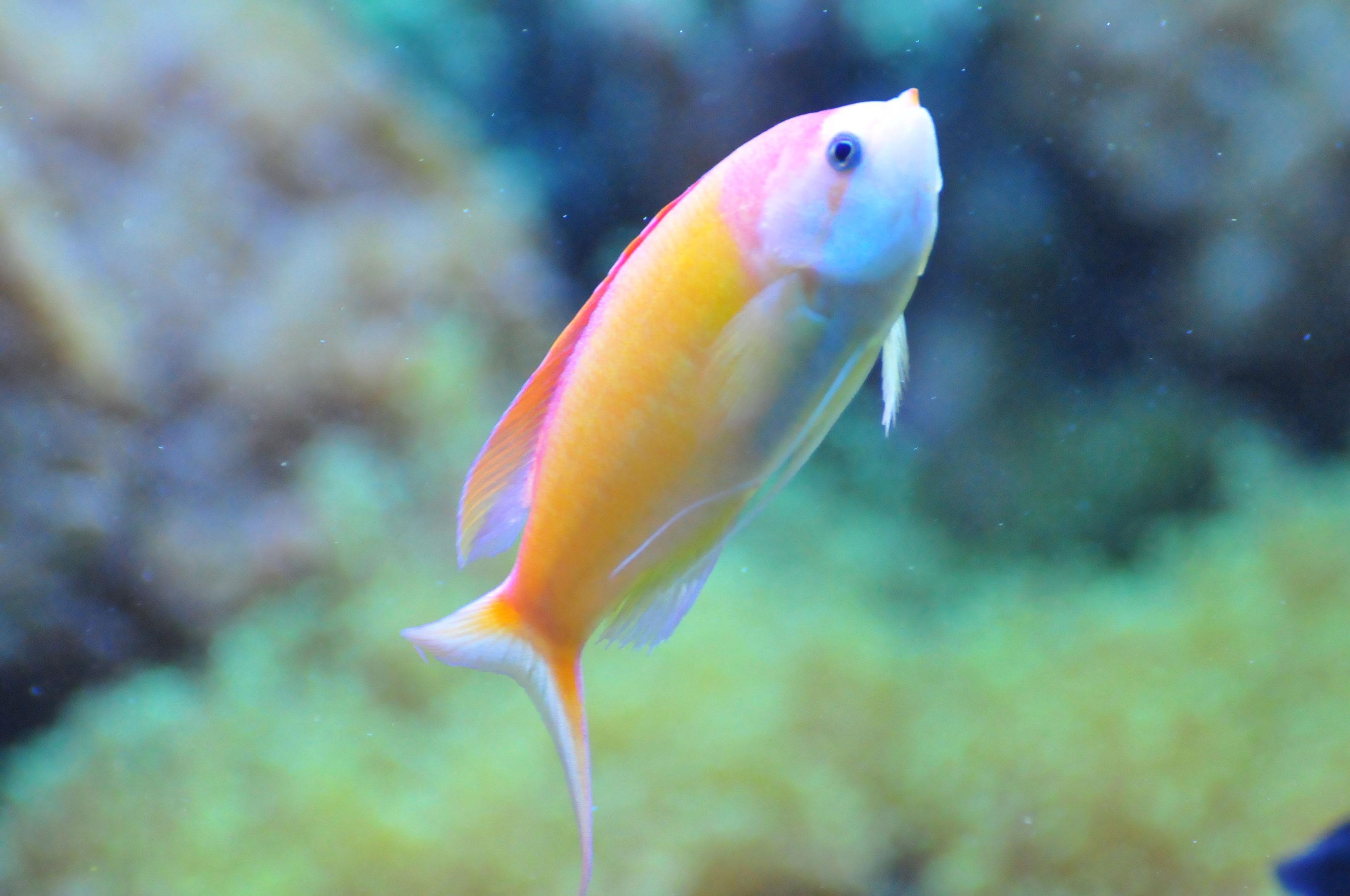 Untitled document for Fish fish fish fish fish